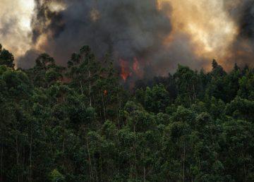 Quintana Roo es afectado por cuatro incendios forestales