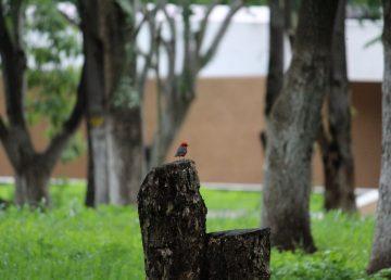 Inicia en el Día del Árbol campaña nacional de restauración forestal