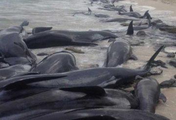 Desoladora imagen de ballenas muertas en Islandia da vuelta al mundo