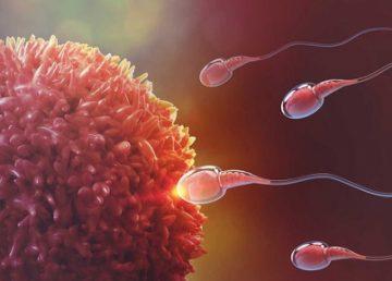 UNAM estudia espermatozoide en 3D para mejorar la fecundación