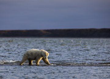 El centro meteorológico danés descarta el máximo de temperatura en Groenlandia