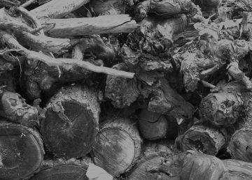 Causa miles de muertes el uso de leña para cocinar en México