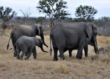 Lanzan campaña para conservar vida silvestre en Kenia