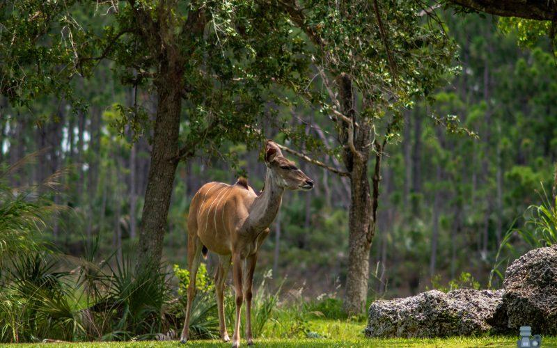 La odisea de repoblar un parque nacional casi extinto