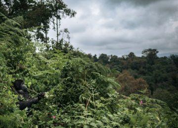 Un tercio de la flora tropical de África está potencialmente amenazada de extinción