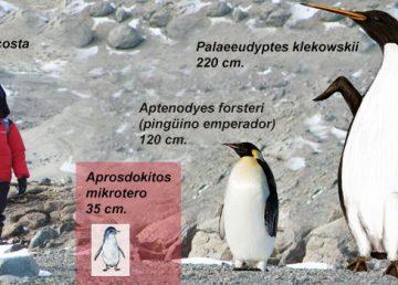 Científicos argentinos hallan en Antártida fósiles de un pingüino gigante