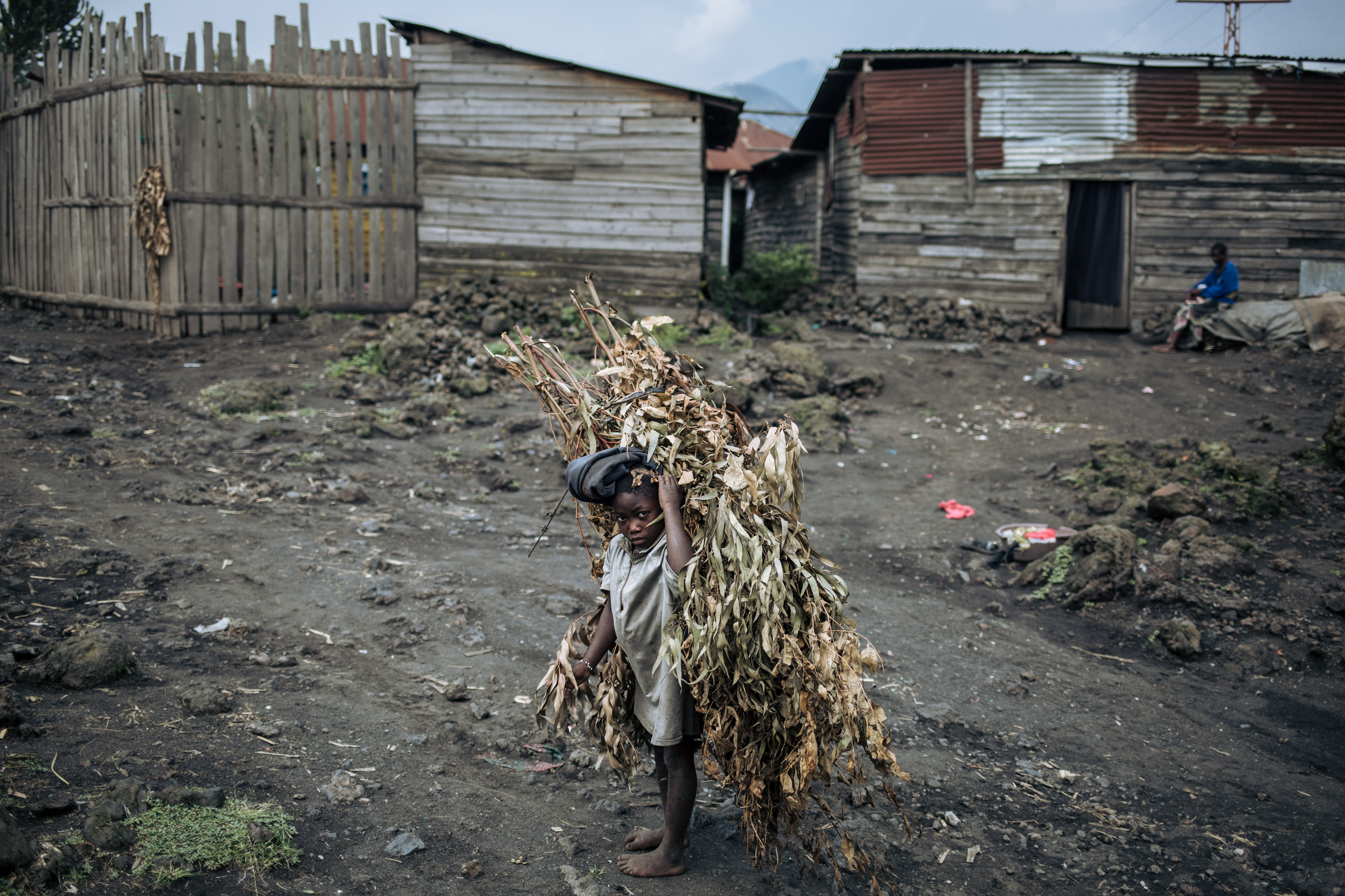 DRCONGO-ENVIRONMENT-ECONOMY-AGRICULTURE-SILVICULTURE