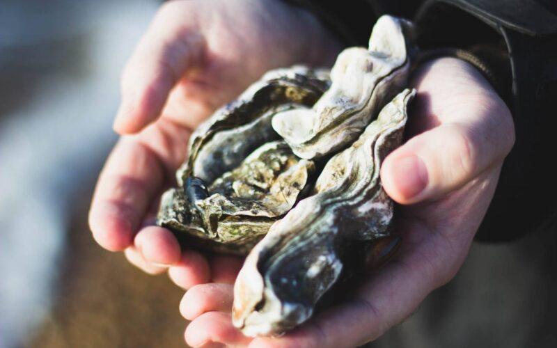 Las ostras producen materiales con una técnica parecida a la impresión 3D