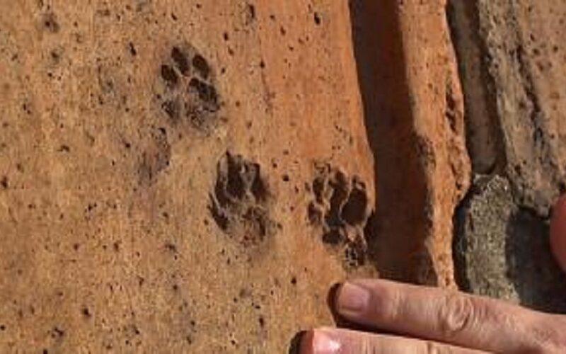 Aparecen huellas de animales que se pasearon por las tejas de la catedral de Florencia