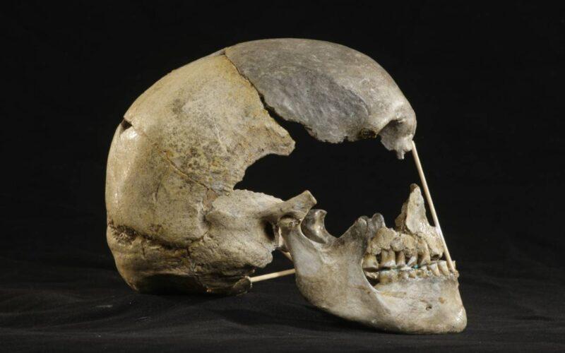 El sexo entre los primeros sapiens y los neandertales fue más común de lo que se creía