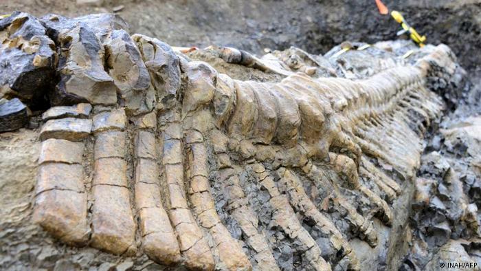 Paleontólogos mexicanos identifican una nueva especie de dinosaurio