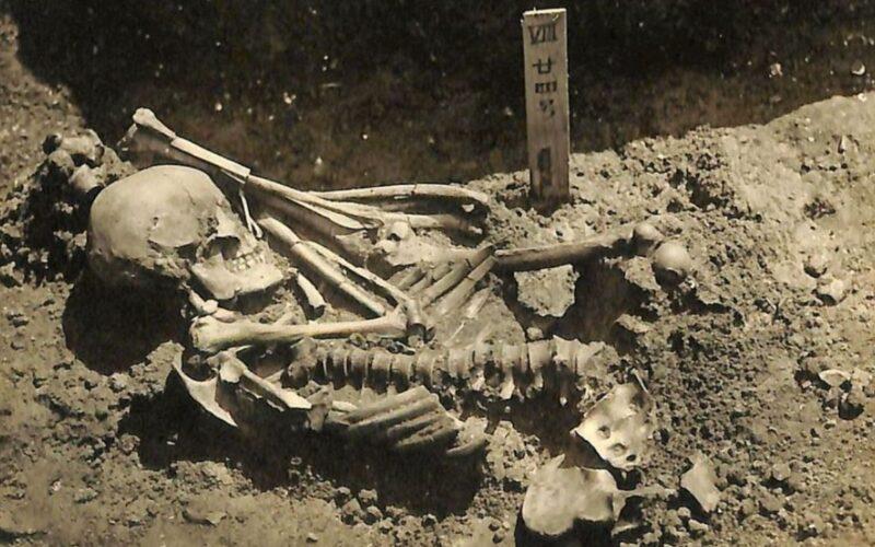 Un hombre muerto hace 3.000 años, la primera víctima conocida de un tiburón