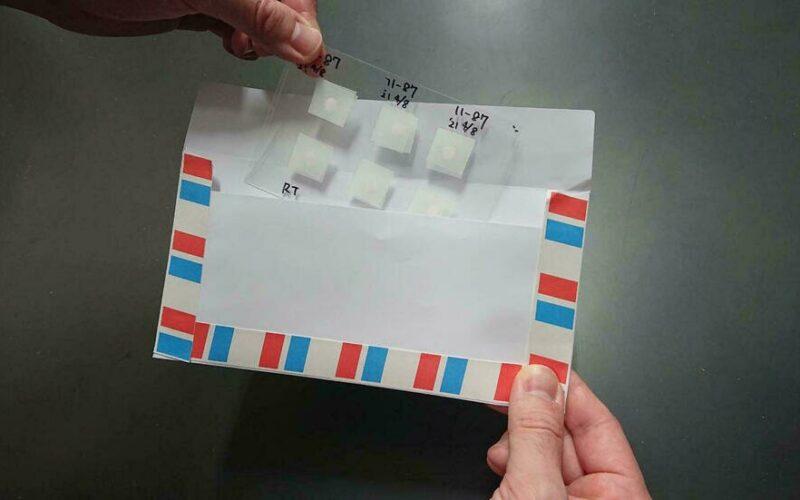 Científicos japoneses desarrollan postales de esperma de ratón liofilizado