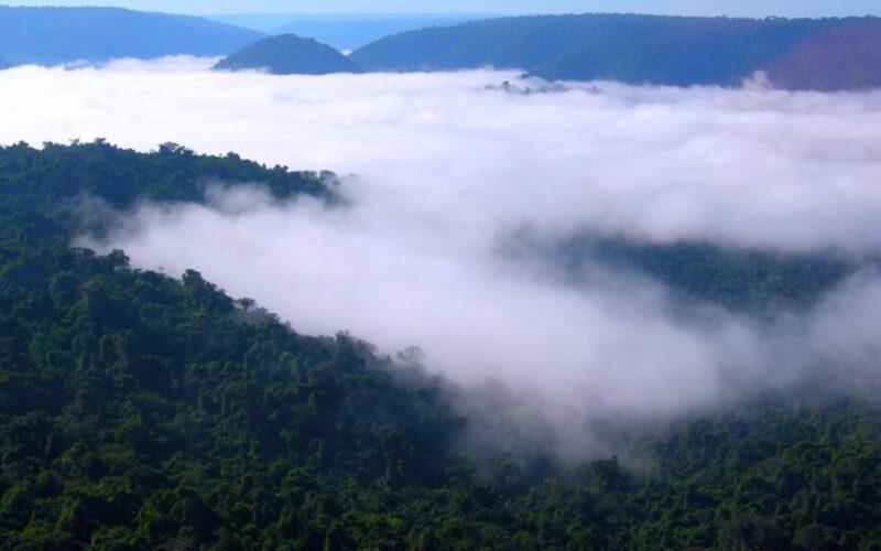 Amazonía: La ciencia puede ayudar a frenar deterioro, pero no sola