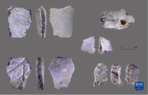 Hallan fósil de cráneo humano de 32.000 años en provincia china de Henan